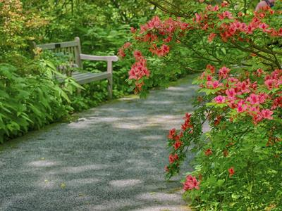 https://imgc.artprintimages.com/img/print/usa-delaware-walkway-in-a-garden-with-azaleas-and-a-park-bench_u-l-q1gteng0.jpg?p=0