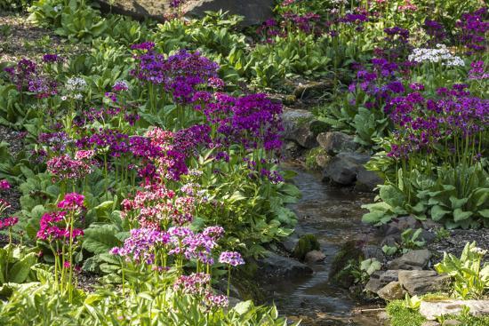 USA, Delaware, Wilmington. Brook running between rocks and flowers-Hollice Looney-Photographic Print