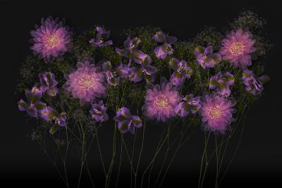 USA, Florida. Floral bounty-Hollice Looney-Photographic Print