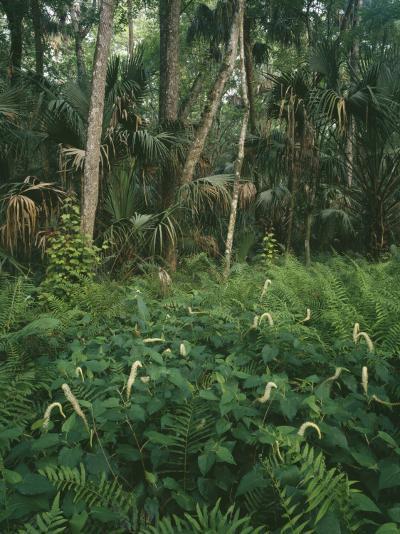 Usa, Florida, Highland Hammock State Park-Jeff Foott-Photographic Print