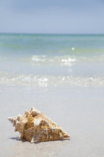Usa, Florida, St. Petersburg, Conch Shell on Beach-Vstock LLC-Photographic Print