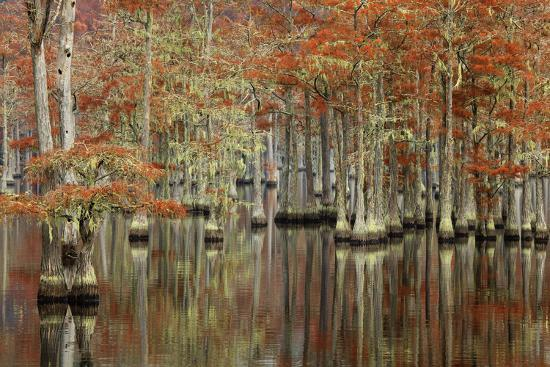 USA, Georgia, Cypress Swamp with Fall Reflections-Joanne Wells-Photographic Print
