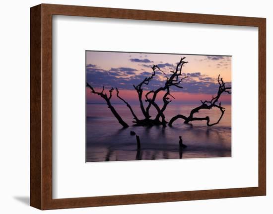 USA, Georgia, Jekyll Island, Driftwood Beach at Sunrise-Joanne Wells-Framed Photographic Print