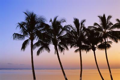 USA, Hawaii, Molokai. Palm Tree, Morning-Walter Bibikow-Photographic Print