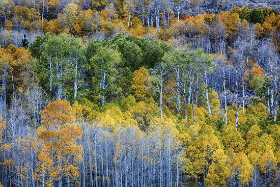 USA, Lee Vining, California. Conway Pass, Mono County.-Joe Restuccia III-Premium Photographic Print