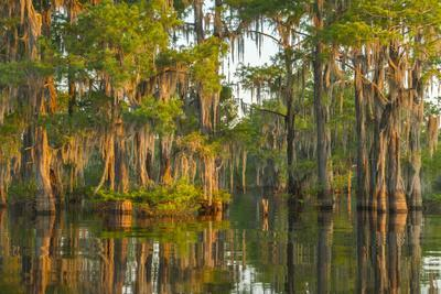 https://imgc.artprintimages.com/img/print/usa-louisiana-atchafalaya-national-wildlife-refuge-sunrise-on-swamp_u-l-q1gc5ws0.jpg?p=0