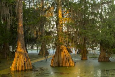 https://imgc.artprintimages.com/img/print/usa-louisiana-atchafalaya-national-wildlife-refuge-sunrise-on-swamp_u-l-q1gclgw0.jpg?p=0