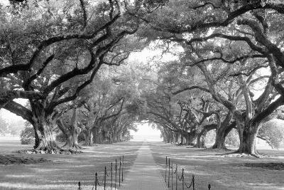 USA, Louisiana, New Orleans, brick path through alley of oak trees--Photographic Print