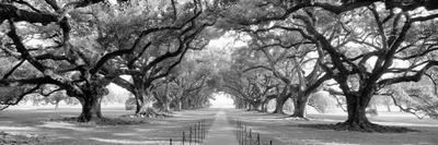 https://imgc.artprintimages.com/img/print/usa-louisiana-new-orleans-brick-path-through-alley-of-oak-trees_u-l-q1bls0p0.jpg?p=0