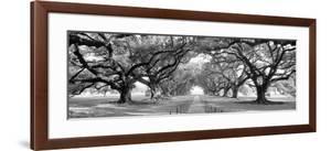 USA, Louisiana, New Orleans, brick path through alley of oak trees