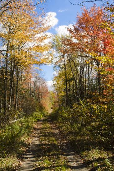 USA, Maine, Bar Harbor. Path in Fall Colors of Red and Gold Foliage-Bill Bachmann-Photographic Print