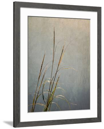 USA, Massachusetts, Cape Cod, Dew-covered reeds at sunrise, texture overlay,-Ann Collins-Framed Photographic Print