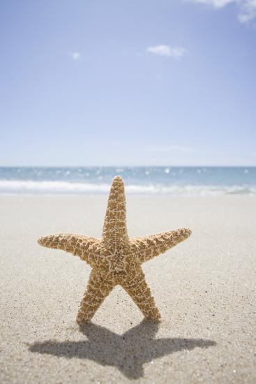 Usa, Massachusetts, Cape Cod, Nantucket, close up of Starfish on Sand-Chris Hackett-Photographic Print