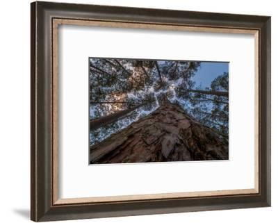 USA, Minnesota, Itasca State Park-Peter Hawkins-Framed Photographic Print
