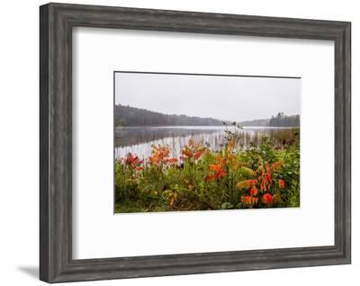 USA, Minnesota, Itasca State Park-Peter Hawkins-Framed Photographic Print