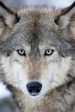 https://imgc.artprintimages.com/img/print/usa-minnesota-sandstone-eyes-of-the-wolf_u-l-q1d29rr0.jpg?p=0
