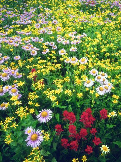 USA, Montana, Glacier National Park. Wildflowers-Jaynes Gallery-Photographic Print