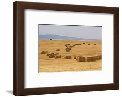 USA, Montana, near Drummond. Bales of hay in a field that has just been harvested.-Tom Haseltine-Framed Photographic Print