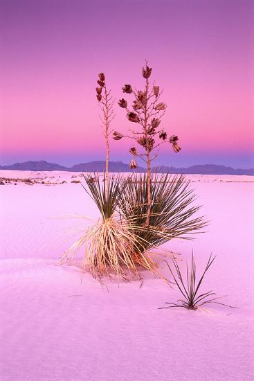 USA, New Mexico, of White Sand National Monument, Desert, Soaptree Yucca-Frank Lukasseck-Photographic Print