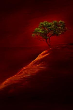https://imgc.artprintimages.com/img/print/usa-new-mexico-red-rock-state-park-abstract-of-lone-tree-at-sunset_u-l-q1gbqf40.jpg?p=0