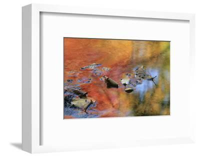 USA, New York, Adirondack Mountains. Autumn Reflections in Stream-Jaynes Gallery-Framed Photographic Print