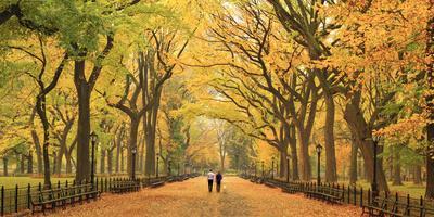 https://imgc.artprintimages.com/img/print/usa-new-york-city-manhattan-central-park-the-mall_u-l-q12su6k0.jpg?p=0
