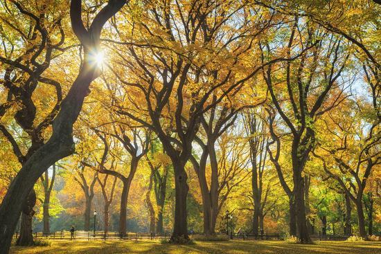 Usa, New York City, Manhattan, Central Park, the Mall-Michele Falzone-Photographic Print