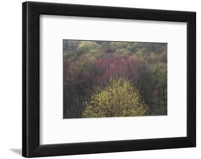 USA, New York State. Spring blooming trees, Labrador Hollow Unique Area-Chris Murray-Framed Photographic Print