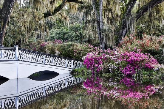USA, North Carolina., white bridge with Azaleas and moss-covered tree-Hollice Looney-Premium Photographic Print