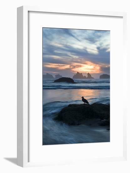 USA, Oregon, Bandon Beach. Seagull on Rock at Twilight-Jaynes Gallery-Framed Photographic Print