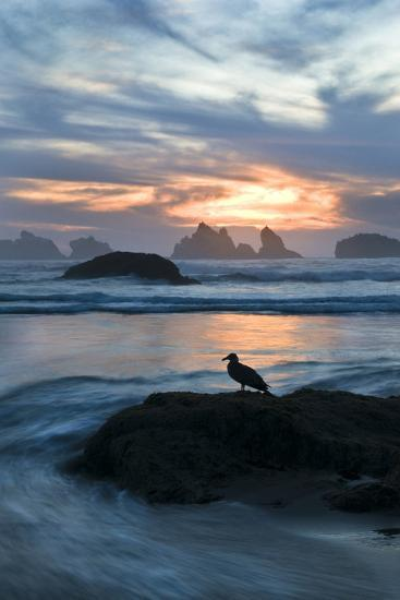 USA, Oregon, Bandon Beach. Seagull on Rock at Twilight-Jaynes Gallery-Photographic Print