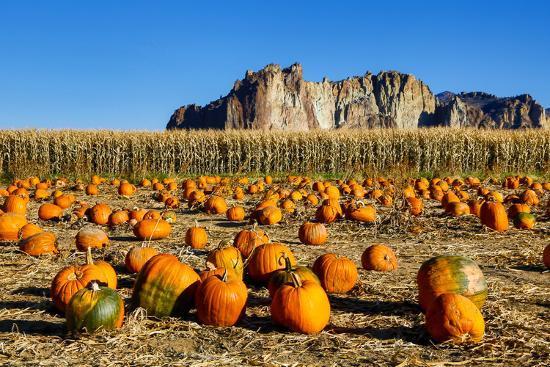 USA, Oregon, Bend. Pumpkin harvest-Hollice Looney-Premium Photographic Print
