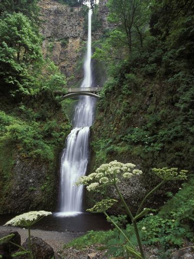 USA, Oregon, Columbia River Gorge Area, Scenic Waterfalls, Multonomah Falls-Chris Cheadle-Photographic Print