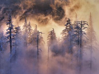 USA, Oregon, Mt Hood National Forest. Evergreens in Fog-Jaynes Gallery-Photographic Print