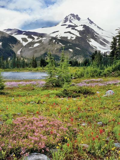 USA, Oregon, Mt Jefferson Wilderness. Mount Jefferson and Field of Wildflowers-Jaynes Gallery-Photographic Print