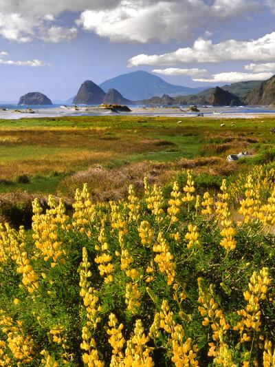 USA, Oregon, Ophir. Landscape of Yellow Lupine and Ocean Beach-Jaynes Gallery-Photographic Print