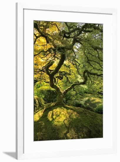 Usa, Oregon, Portland. Japanese lace maple tree-Jaynes Gallery-Framed Premium Photographic Print
