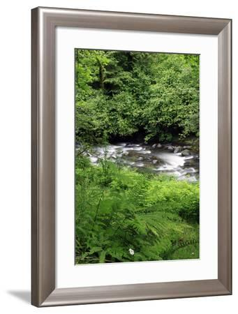 USA, Oregon. Scenic of Little Sandy River and Ferns-Steve Terrill-Framed Photographic Print