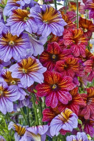 https://imgc.artprintimages.com/img/print/usa-pennsylvania-kennett-square-painted-tongue-blossoms_u-l-q1gcrzp0.jpg?p=0