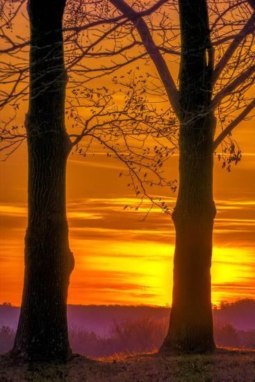 USA, Pennsylvania, King of Prussia. Tree Silhouette at Sunrise-Jay O'brien-Photographic Print