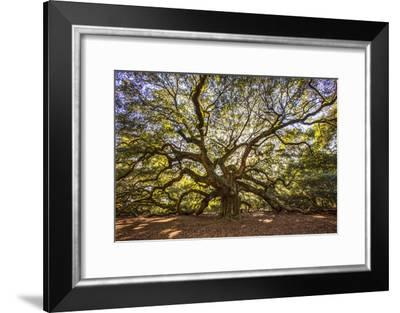 USA, South Carolina, Charleston, Angel Oak-Hollice Looney-Framed Photographic Print