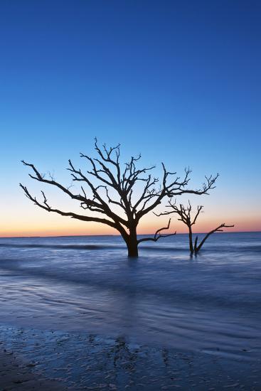 Usa South Carolina Edisto Island Botany Bay Boneyard Beach Dawn Photographic Print By Rob Tilley Art