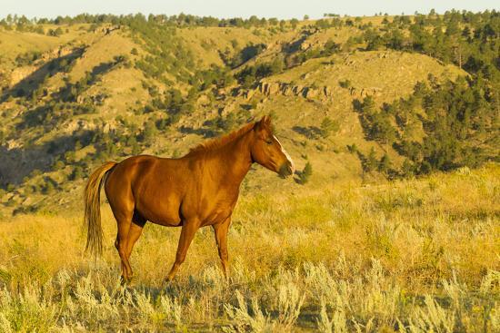 USA, South Dakota, Wild Horse Sanctuary. Wild Horse in Field-Cathy & Gordon Illg-Photographic Print