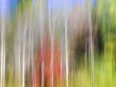 USA, Tennessee, Cherokee NF. Abstract Tree Reflections in Pond-Don Paulson-Photographic Print