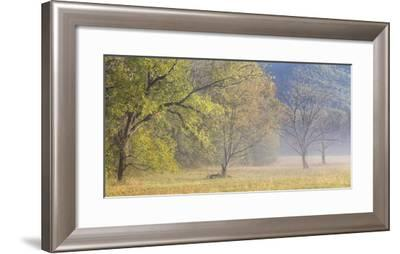 USA, Tennessee, Great Smoky Mountains National Park. Panoramic view of foggy morning in Cades Cove-Ann Collins-Framed Photographic Print