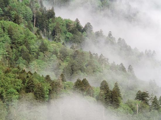 USA, Tennessee, North Carolina, Great Smoky Mountains National Park-Zandria Muench Beraldo-Photographic Print