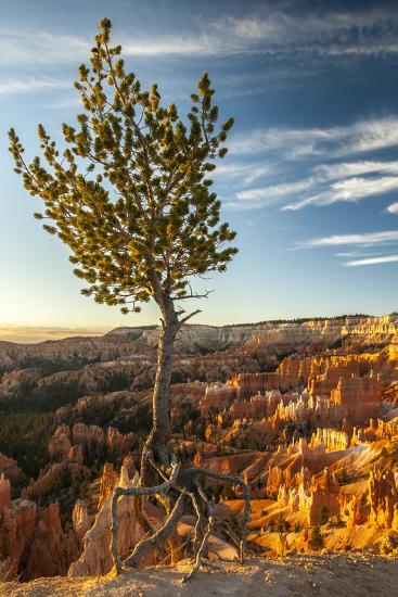 USA, Utah, Bryce Canyon National Park. Sunrise on ponderosa pine and canyon.-Jaynes Gallery-Premium Photographic Print