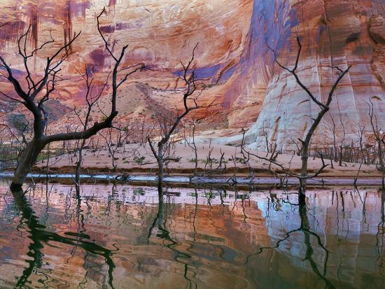 USA, Utah, Glen Canyon Nra. Drought Reveals Dead Trees-Jaynes Gallery-Photographic Print