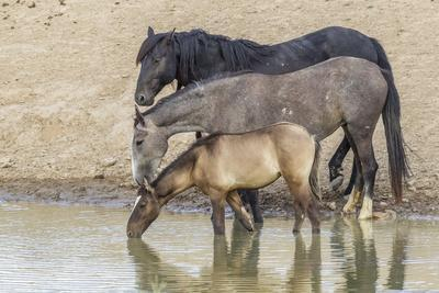 https://imgc.artprintimages.com/img/print/usa-utah-tooele-county-wild-horses-drinking-from-waterhole_u-l-q1gbqj80.jpg?p=0