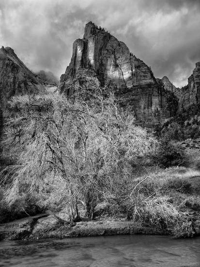 USA, Utah, Zion National Park. Cottonwood in winter-Ann Collins-Photographic Print
